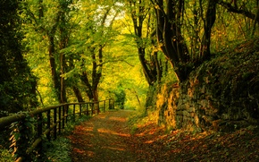 Wallpaper road, trees, forest, leaves