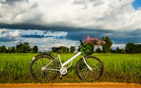 Picture greens, the sky, grass, leaves, trees, bike, background, widescreen, Wallpaper, mood, wheel, wallpaper, flowers, bicycle, …