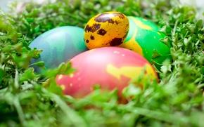 Picture greens, space, macro, eggs, Easter, socket, space, eggs, easter, painted eggs