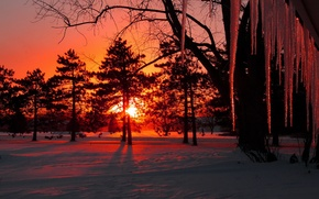 Picture winter, the sun, snow, trees, sunset, icicles