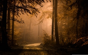 Wallpaper fog, autumn, forest