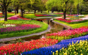 Picture trees, flowers, pond, Park, sunrise, tulips, colorful, trees, blue, park, flowers, beautiful, tulips, Muscari, spring, ...
