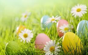 Wallpaper grass, glade, chamomile, eggs, Easter, flowers, spring, Easter, eggs