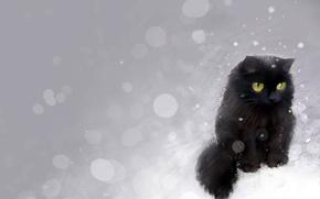 Picture glare, black, Cat, pictured