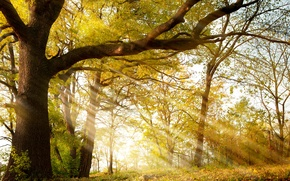 Picture Autumn, Trees, Branches, Trunk, Rays Of Light, Seasons