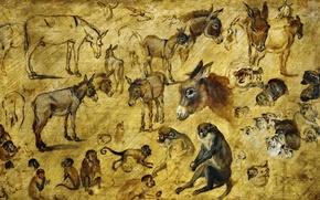 Picture animals, picture, Jan Brueghel the elder, Sketches Of Animals