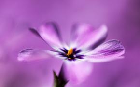 Wallpaper flower, macro, background, petals, Lilac