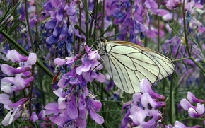 Picture NATURE, GRASS, BUTTERFLY, WINGS, GREENS, WHITE, FLOWERS