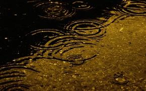 Wallpaper the rain, water, drops