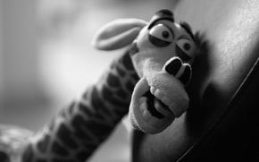 Picture toy, giraffe, Melman