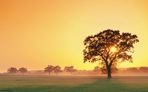 Picture sunset, fog, tree