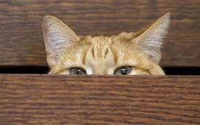 Wallpaper cat, house, wardrobe