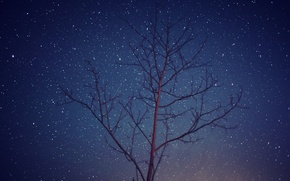 Picture space, stars, trees, night, branch