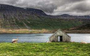 Wallpaper sheep, grass, river, landscape, animals