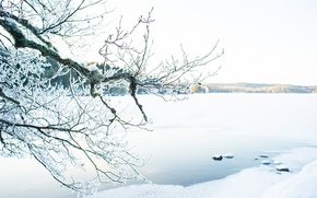 Picture winter, lake, sunlight, branches
