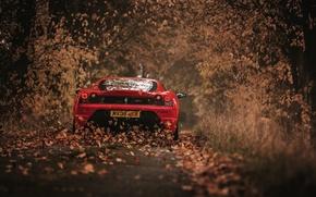 Picture autumn, leaves, 430 Scuderia