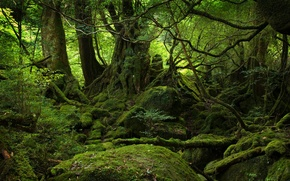 Wallpaper landscape, greens, moss