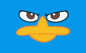 Picture disney, disney, perry, Perry, phineas and ferb, the platypus, Phineas and ferb
