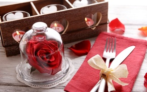 Picture romance, rose, candles, love, rose, romantic, candle, serving, Valentines's Day