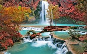 Wallpaper trees, Waterfall
