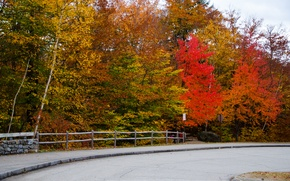 Picture road, autumn, forest, nature, colors, forest, Nature, road, trees, autumn, fall