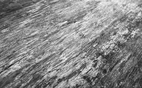 Picture grey, tree, texture, wood, gray