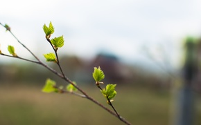 Picture nature, sprig, branch, bokeh, razmytost
