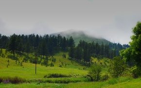 Picture forest, summer, trees, nature, fog, the steppe, green, field, mountain, summer, forest, Nature, trees, field, …