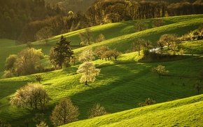 Wallpaper road, greens, forest, grass, the sun, trees, hills, spring, Germany, flowering