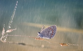 Picture drops, macro, squirt, rain, butterfly, stem, Wallpaper from lolita777