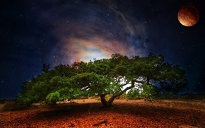 Wallpaper greens, space, stars, night, nature, tree, foliage, planet