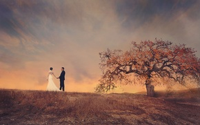Picture field, the sky, tree, pair, the bride, the groom, wedding dress