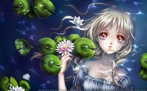 Picture water, pond, Kaori Minakami, water lilies