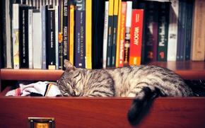 Picture cat, clothing, books, sleep, shelf, wardrobe