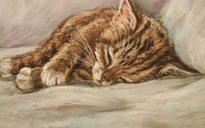 Picture cat, sleeping kitten, ginger kitten, D.Burgus