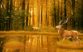 Picture Water, Nature, Trees, Forest, Two, Animals, Deer