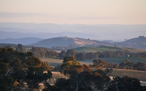 Picture trees, sunset, hills, the evening, Australia, Victoria, Near Beechworth