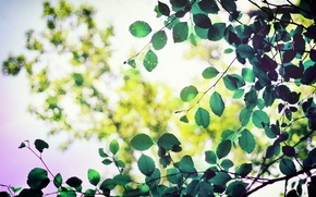Wallpaper widescreen, leaf, blur, leaves, HD wallpapers, Wallpaper, leaf, leaves, tree, full screen, green, background, fullscreen, ...