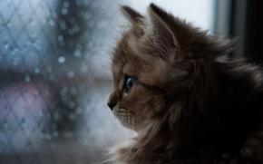 Picture cat, rain, window, Daisy, © Ben Torode