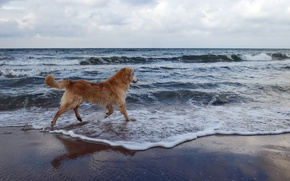 Picture sea, background, dog