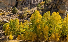 Picture autumn, leaves, trees, mountains, stones, rocks