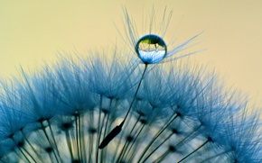 Picture water, macro, Rosa, background, dandelion, blue, widescreen, Wallpaper, drop, wallpaper, widescreen, background, macro, full screen, …