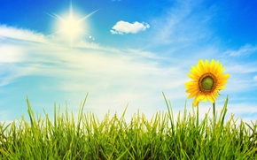 Picture the sky, grass, the sun, light, flowers, nature, landscapes