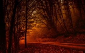 Picture autumn, forest, trees, landscape, nature, road