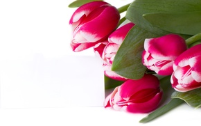 Picture leaves, bouquet, tulips, white background, buds, closeup