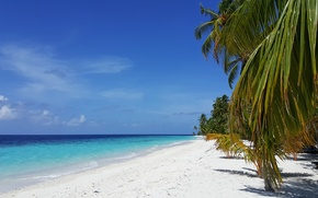 Picture beach, tropics, palm trees, the ocean, exotic, white sand, island, Мaldives