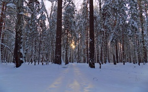 Picture winter, forest, the sun, snow, trees