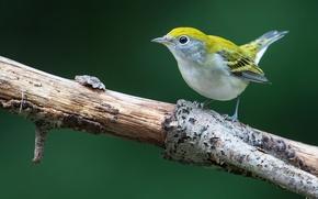 Picture bird, branch, wildlife