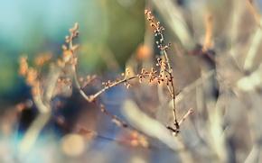 Wallpaper nature, focus, spring, blur, bokeh, twigs