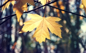 Picture macro, sheet, nature, maple, branches, autumn